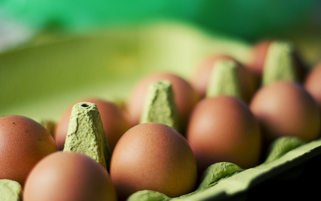 Is Plant Protein, Egg-xactly what BodyBuilders need?
