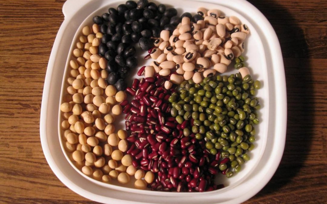 5 Reasons to Avoid Plant Based Protein